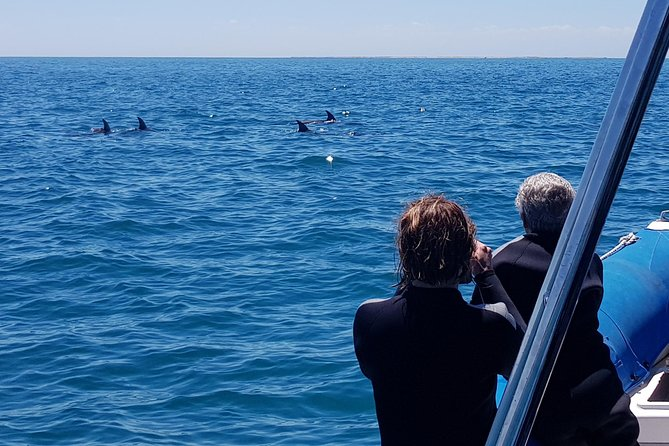 Dolphin and Seal Watching Eco Boat Cruise Mornington Peninsula photo 13