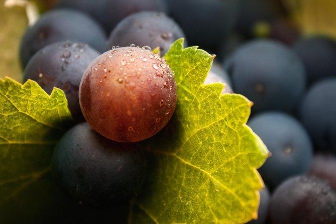 Guided Visit in Bodega San Juan Winery