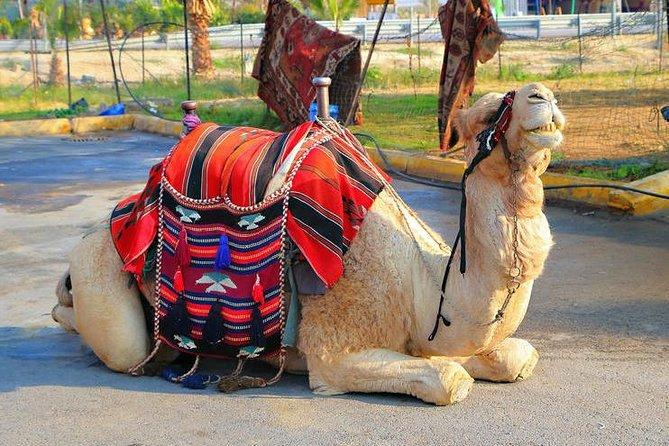 Marraech Quad Bikinig, and Camel Riding tour.