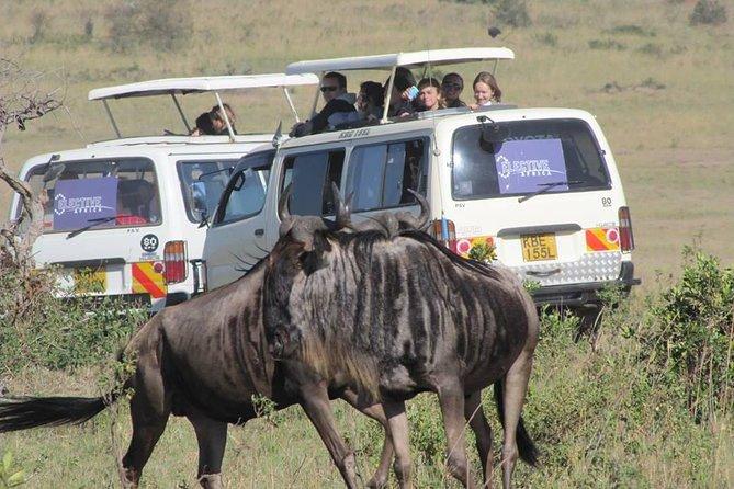 3 Day Masai Mara Authentic Safari