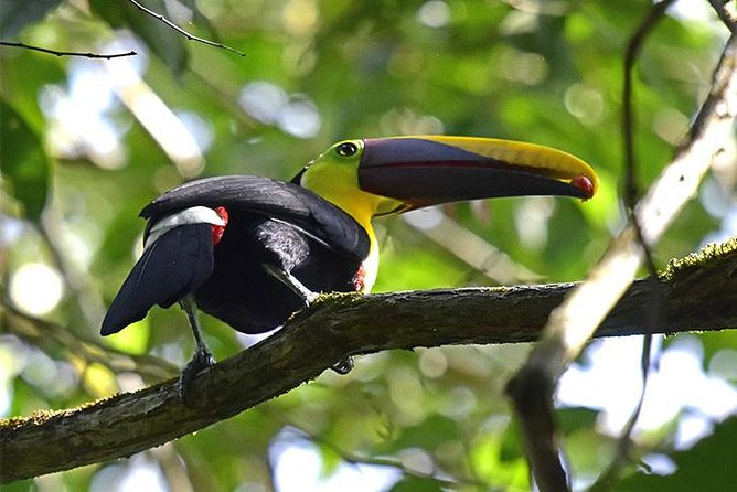Excursion to Corcovado National Park 3 days / 2 nights via Playa Carate