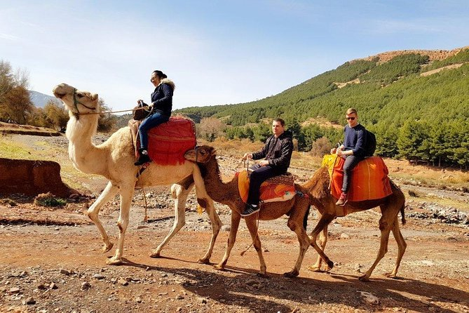 Atlas Mountains Day Trip From Marrakech 3 Valleys & Berber Villages & Camel Ride photo 11
