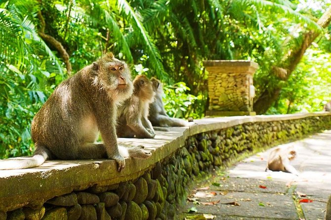 Ubud Tour Discover by Traditional village, monkey forest, Rice Terrace Waterfall photo 2