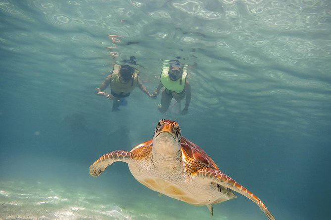 Tortugas & CenoteS snorkel With Turtles Tour