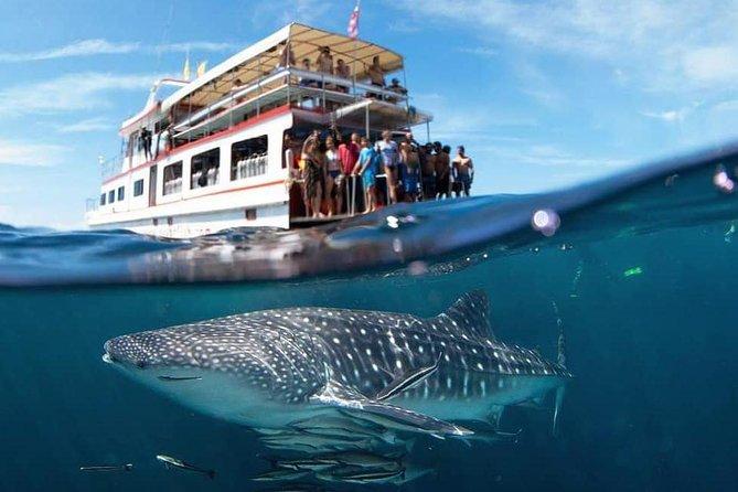 Fun Diving Safari Day Trip From Koh Lanta - Certified Divers