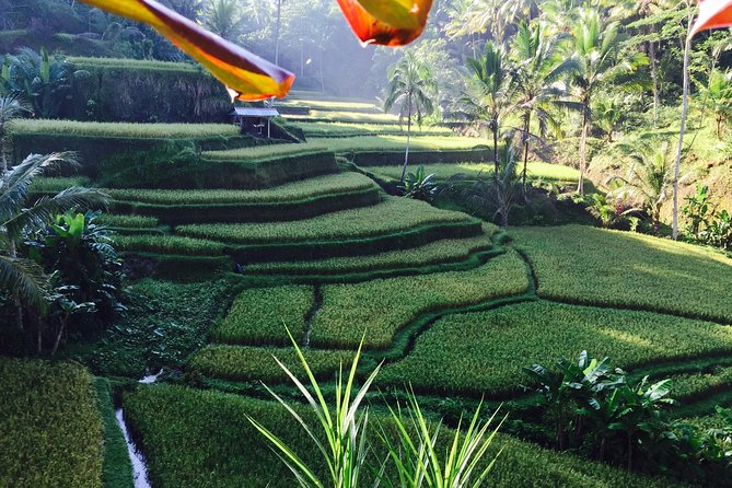 Ubud ,waterfalls And ,swing Day Tour