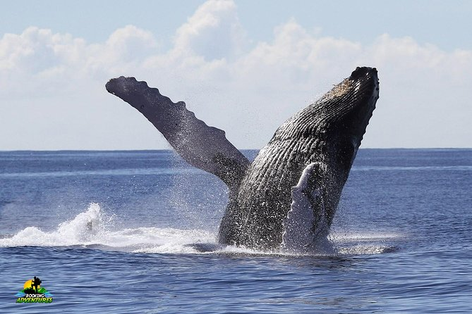 Bacardi Island + Whale Watching from Samaná - Private Boat Tour (Min 4 people)