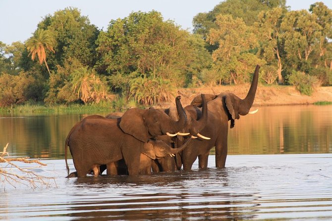 Chobe Full Day Trip photo 4
