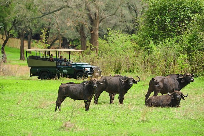 Chobe Full Day Trip photo 9