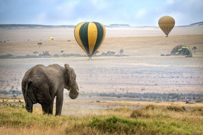 Classic Best Adventure In Kenya And Tanzania 2019/2020 photo 3
