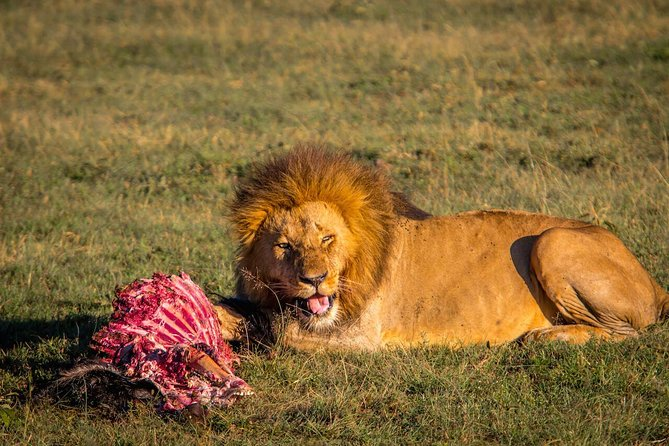 3 days in Maasai Mara photo 6