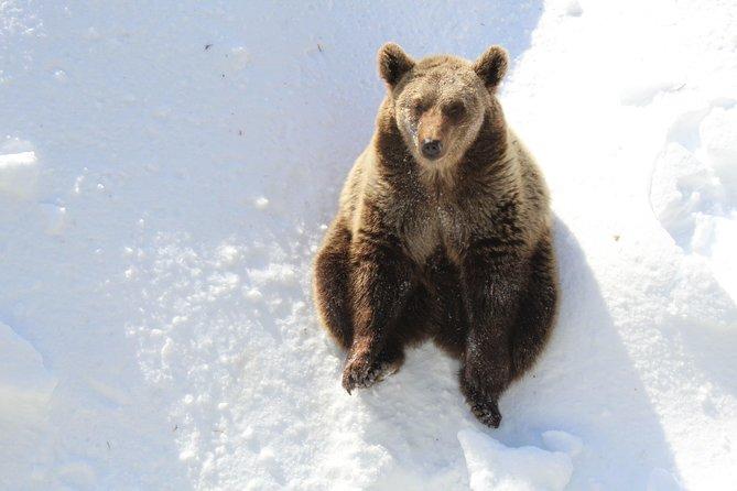 Visita el zoo de Ranua el mas septentrional del mundo