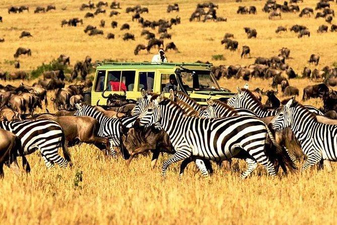 7 Days Luxury Lodge Safaris