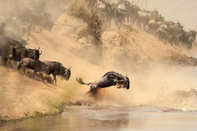 8 Days, 7 Nights Masai Mara, Lake Nakuru, Lake Naivasha, Samburu And Aberdares