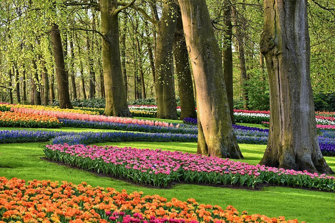 Private Skip the Line Keukenhof Gardens and Tulip Fields Tour from Amsterdam
