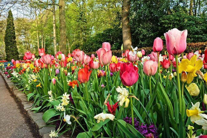 Private Sightseeing tour to Keukenhof Gardens and the Windmills from Amsterdam