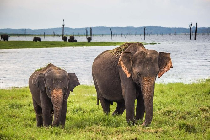 Private Tour: Kaudulla National Park Safari photo 7