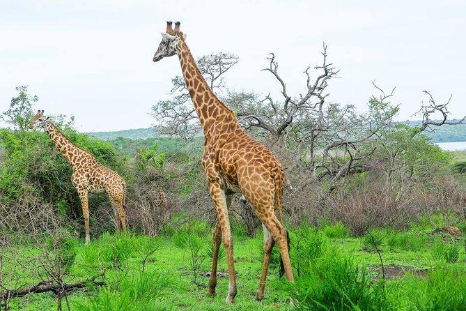 Uganda Rwanda Gorilla & Wildlife Safari: 9 Days