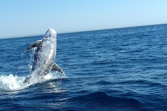Lagos - Dolphin Watching by Mergus Dolphins