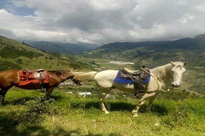 Horseback Riding In The Llanganates