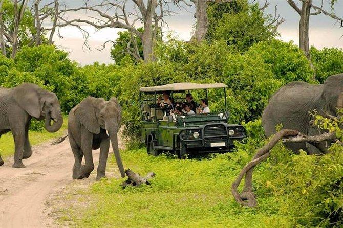Chobe Day Trip From Livingstone