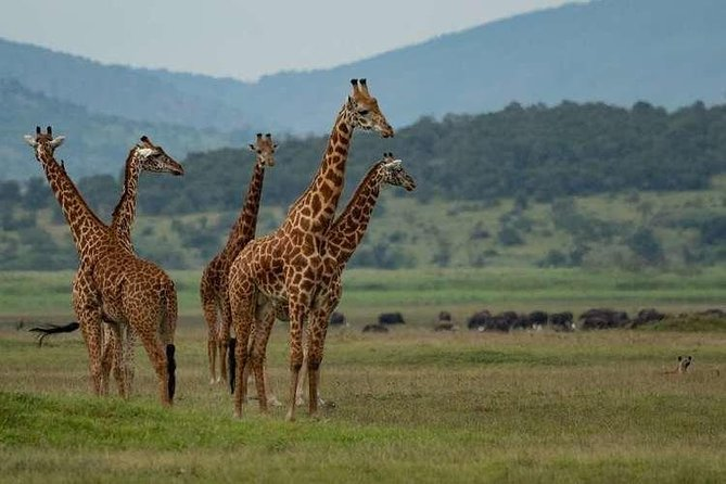 2 Days Akagera National Park Safari