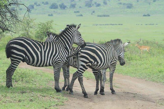 12 Day Uganda & Rwanda Experience