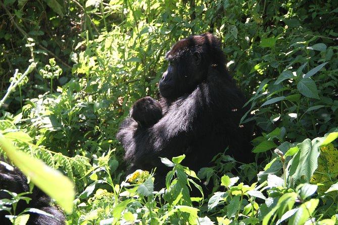 6 Days Uganda & Rwanda Gorilla Safari