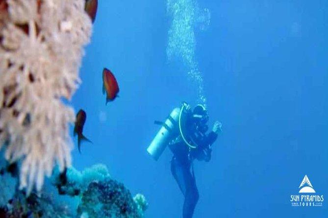 Diving Trip to Tiran Island