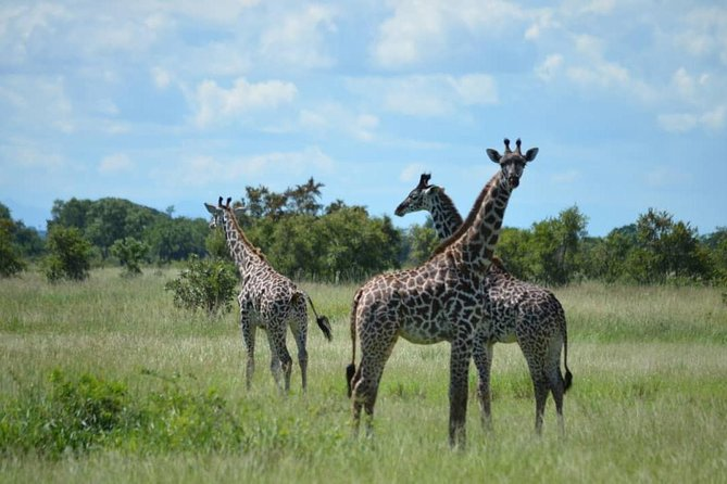2 Days 1 Night Mikumi National Park from Dar es salaam