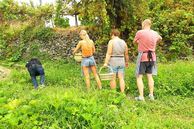 Fridays - Garden-To-Plate: Cook With A Local & Small Group Villages Day Tour 8hr