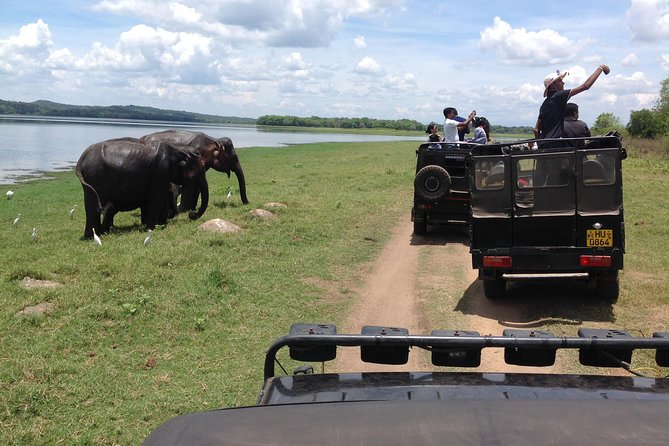 Minneriya National Park Safari Tour From Dambulla or Polonnaruwa