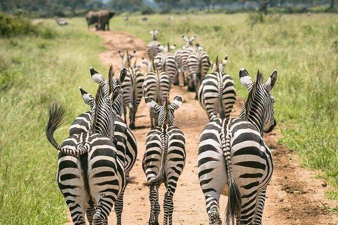 14 Days Ultimate Safari In Uganda & Rwanda