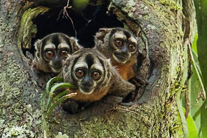 Private Amazing Amazon Discovery Tour - 4 Days, Iquitos, Peru