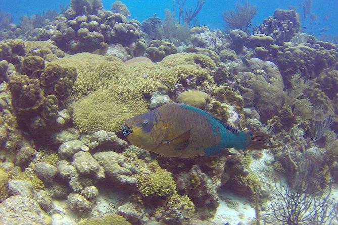 Discover scuba diving on Bonaire - Private dive 1 person shore dive