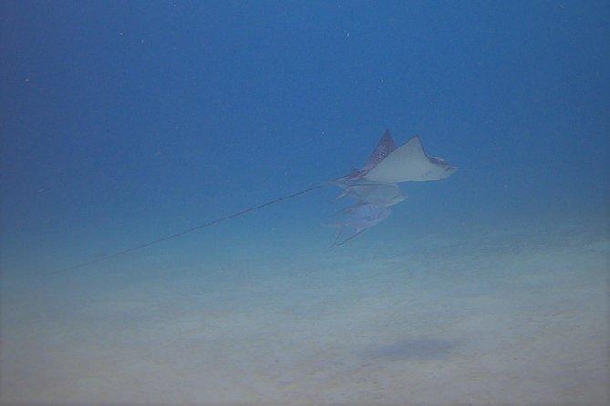 Guided scuba dive on Bonaire - Private 1 person shore dive