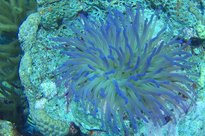 Discover scuba diving on Bonaire - Max. 2 guests shore dive
