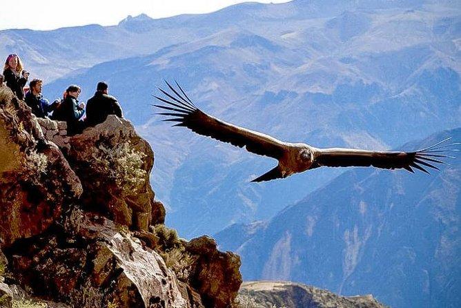 Puno - Colca Canyon - Arequipa 2d - 1n