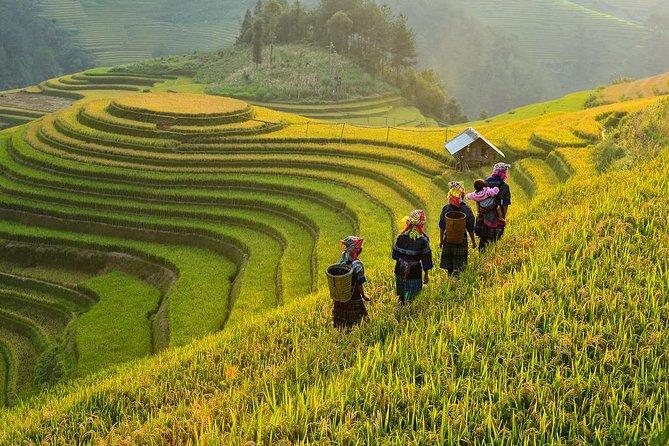 Trekking In Mu Cang Chai 4 Days
