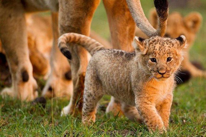 Wildlife Adventures 5 Days