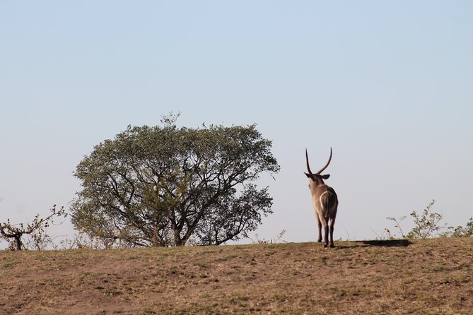 5Days Blyde River Canyon and Kruger National Park Overnight Tour and Safaris photo 28