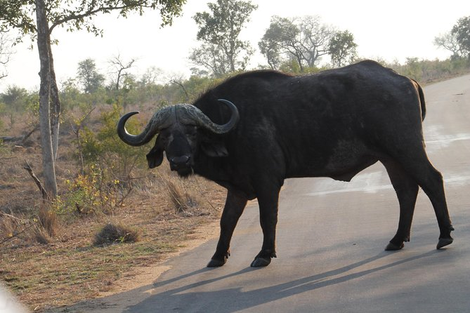 5Days Blyde River Canyon and Kruger National Park Overnight Tour and Safaris photo 8