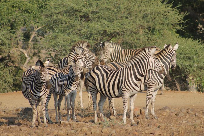 5Days Blyde River Canyon and Kruger National Park Overnight Tour and Safaris photo 23
