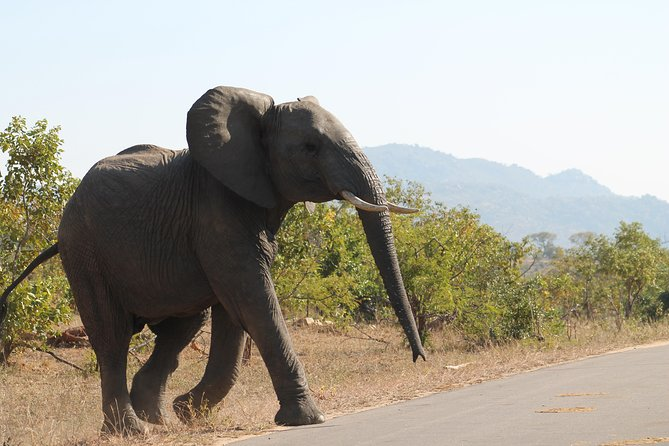 5Days Blyde River Canyon and Kruger National Park Overnight Tour and Safaris photo 27
