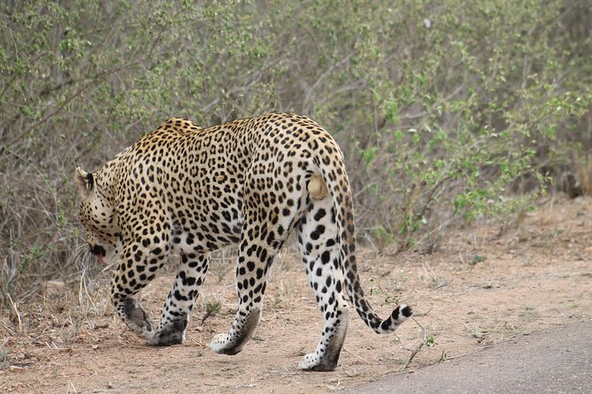 5Days Blyde River Canyon and Kruger National Park Overnight Tour and Safaris photo 3