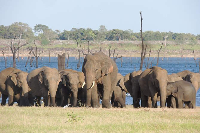 Kaudulla National Park Safari from Habarana (Private 3-Hour Tour)