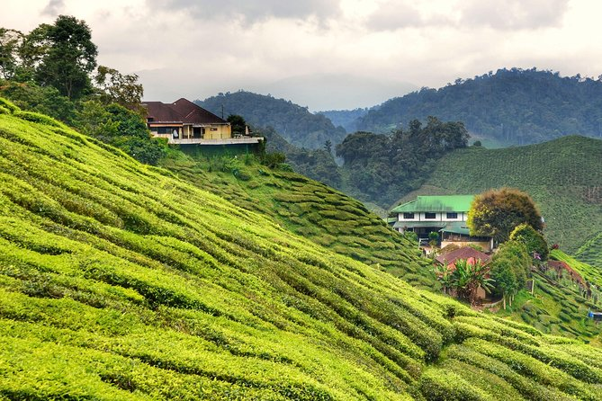 Breezy Cameron Highlands Nature Tour from Kuala Lumpur photo 14
