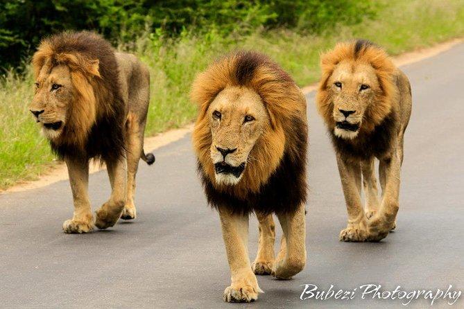 4 Day Bubezi Classic Safari & Panoramic Tour