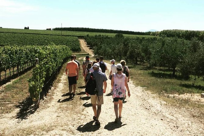 Wine, Oil and Cheese Tour