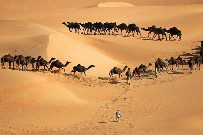 Moreeb Dune Sunset Safari - Liwa Safari with Live BBQ Dinner
